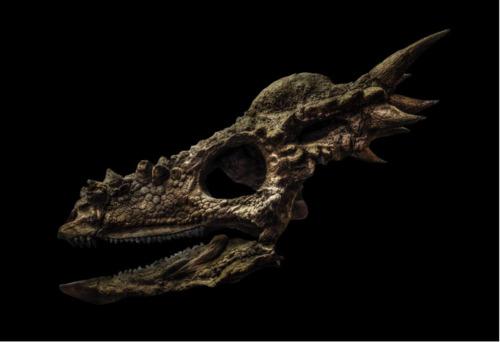 Stygimoloch Spinifier