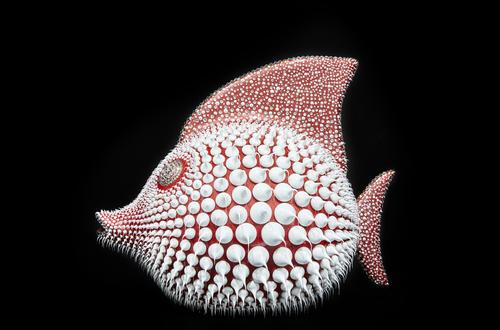 Poisson Lune - Corail, 2021